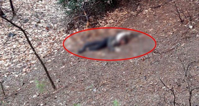 Photo of Kumalığı kabul etmeyince İzmir'e kaçtı! Uçurumdan attı başını taşla ezerek öldürdü